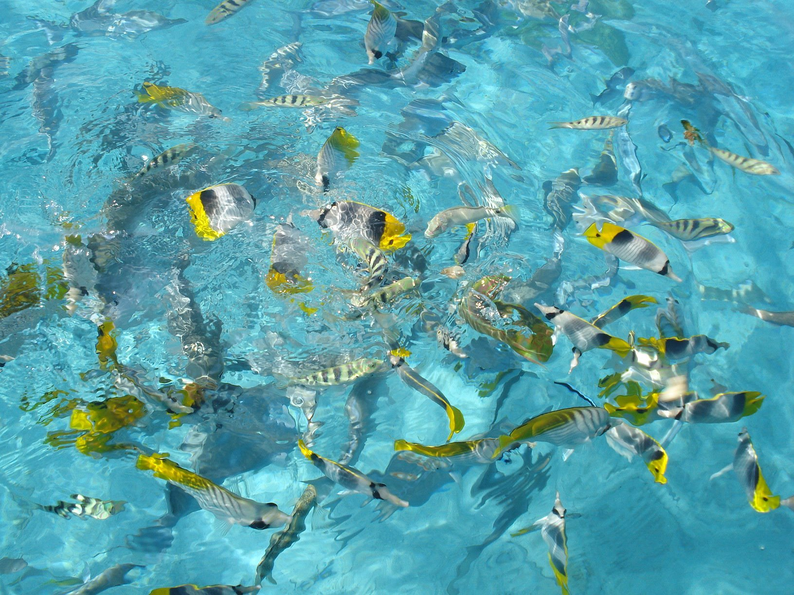 Little fish in the lagoon